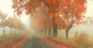 red road by ladyrapid
