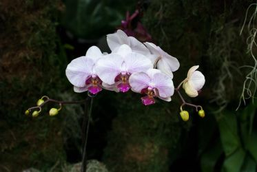 MOBOT: 2011 Orchid Exhibit VII by breaking-reality