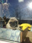 how much is that doggy in the window?! by iluvgrey