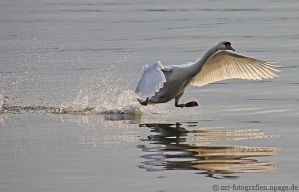He likes to walk on water by MT-Photografien