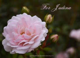 For Judina by Sisterslaughter165