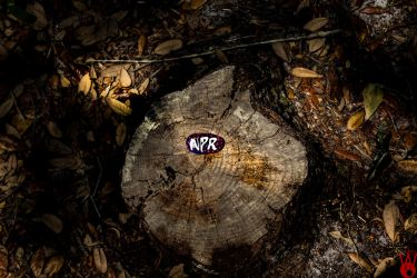 N P R - The Tale of a Stone on a Trunk by DezWGhost