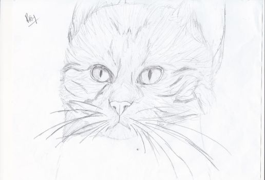 First Attempt at Realistic Cat Drawing. by Canine--Artist