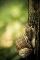 snail by lucoctober