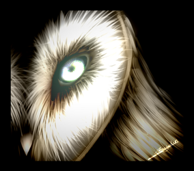 Owl's eye (old) by Shadowflame08