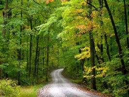 Woods road by harrietsfriend