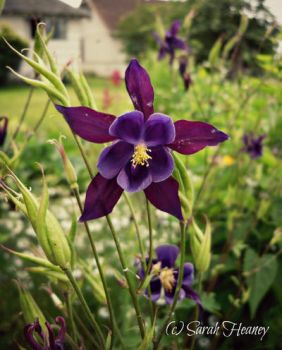 Columbine by Lillith8810