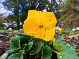 Yellow Macro by SByrnes