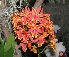 Tiny Orchids by OneClownShoe