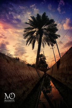 ..PALM.. by MoThEeR-212