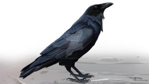 Raven by SeverineDumagny