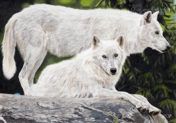Loups Blancs/White Wolves by Sadness40