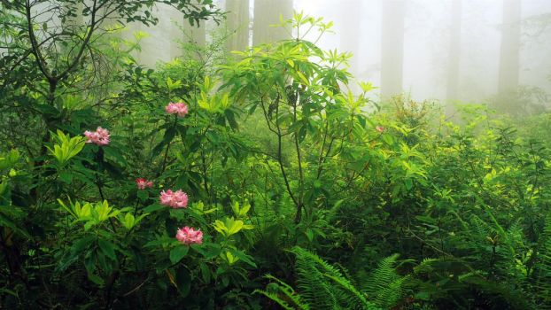 Green Plants by ShoespieReviews