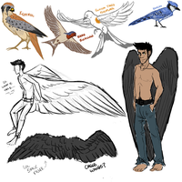 More Winged Things (More Tumblr Sketches) by pidgepudge