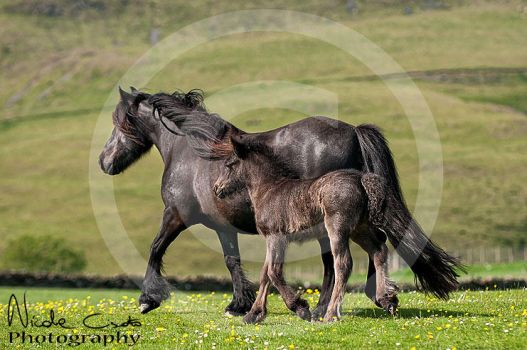 Mare and foal by firegold