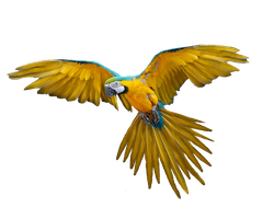 Png Bird by Moonglowlilly