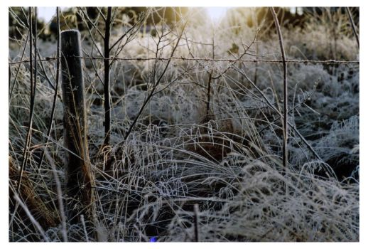 A sunny winter day by NiklasAndersson
