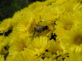 Hoverfly Actor In A Bee Movie by Dowlphin