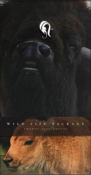 Package - Wild Life - 1 by resurgere