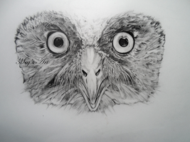 Owl Face by stardust12345