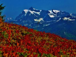 Mt. Shuksan by bootlacephotography