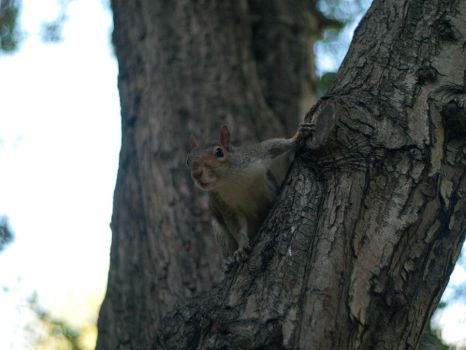 Squirrel up a tree by wob86