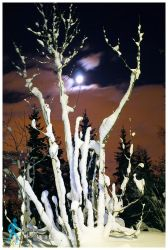 Icy Fingers under the Moon by wlkr