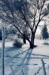 One Frozen Morning 2 by vacuumslayer