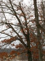orange leaves on a tree by DisneyPrincessNeeNee