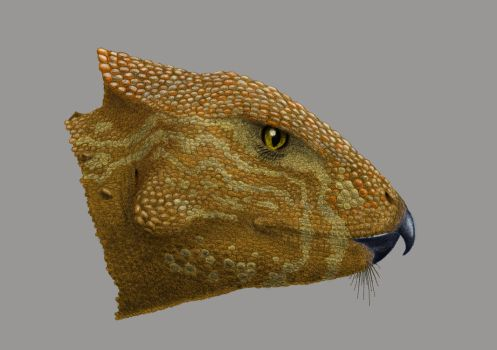 A basal Neoceratopsian by Dontknowwhattodraw94