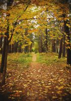 Autumn Forest Path by wormwood-doll