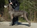 Great dane by wakedeadman