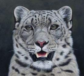 Snow Leopard Portait. Oil on panel by painterman33