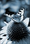 Yoga for the Butterfly by Frider