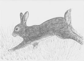 Wild Rabbit by Serial-Painter