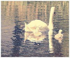 Baby swans! by OMG-ImSoAwesome