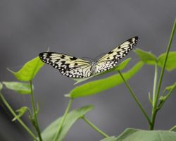 Butterfly 5 by Nolamom3507