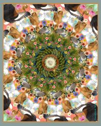 Creation Mandala by adan1mx