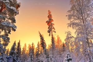 Scandinavian winter by Floreina-Photography
