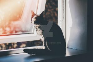 Women and cats will do as they please by schymerau