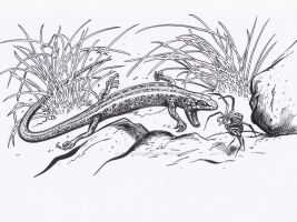 The White's skink having dinner by Snake-Artist