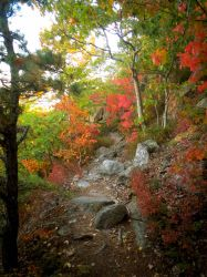 Maine Fall 4 by bleu-claire-stock