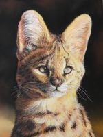 African Seval (Pastel Pencils) by AngelaMaySmith