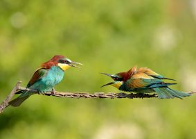Fighting by corsuse