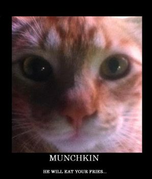 Munchkin by GLHTS