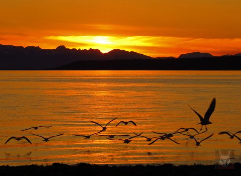 Seagulls Taking Off At Sunset by wolfwings1
