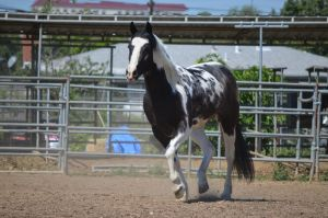 DWP FREE HORSE STOCK 42 by DancesWithPonies