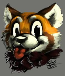 Daily Drawing Day 966 Red Panda  by MidnightHuntingWolf