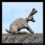 Lammas Hare (DSCF8226 #1a) by Chattering-Magpie
