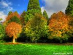 Golden Treees by supersnappz16